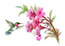 Waterverf wilde exotische vogels op bloemen en takjespatroon op witte achtergrond Royalty-vrije Stock Fotografie