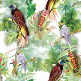 Waterverf Wilde exotische vogels op bloemen naadloos patroon op witte achtergrond Royalty-vrije Stock Afbeeldingen