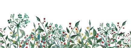 Waterverf wildflower, kruiden, blad Naadloos patroon Illustratie die op witte achtergrond wordt ge?soleerd= royalty-vrije illustratie