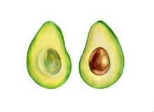 Waterverfavocado, de helft van avocado, avocadozaad stock illustratie