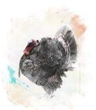 Waterverfbeeld van de Vogel van Turkije Royalty-vrije Stock Afbeelding