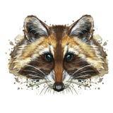 Waterverfbeeld van een dier van de soort van roofzuchtige zoogdieren van de wasbeerfamilie, wasbeerwasbeer, wasbeer, wasbeerportr royalty-vrije illustratie