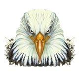 Waterverfbeeld van een dierlijke soort van grote vogels van de haviksfamilie, adelaar, roofdier, portret van een adelaar, witte a vector illustratie