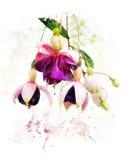 Waterverfbeeld van Fuchsiakleurig Bloemen Stock Afbeeldingen