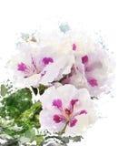 Waterverfbeeld van Geraniumbloemen Royalty-vrije Stock Afbeelding