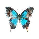 Waterverfbeeld van Tropische Vlinder stock illustratie