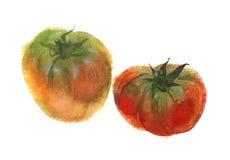Waterverfbeeld van twee rijpe tomaten Geïsoleerd op wit Royalty-vrije Stock Afbeeldingen