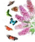 Waterverfbeeld van Vlinder Bush Royalty-vrije Stock Foto's