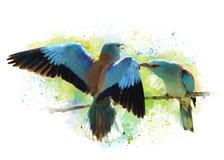 Waterverfbeeld van vogels Europese rollen Stock Afbeeldingen