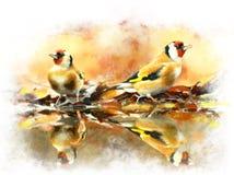 Waterverfbeeld van vogels Gouden vink Royalty-vrije Stock Foto's