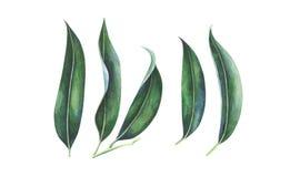 Waterverfbladeren van exotische tropische vruchten royalty-vrije illustratie