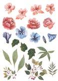 Waterverfbloemen voor verschillend ontwerp worden geplaatst dat stock illustratie