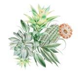 Waterverfboeket met cactus en succulents Illustratie stock afbeeldingen