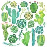 Waterverfcactus en succulente reeks Stock Afbeeldingen
