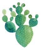 Waterverfcactus het schilderen De Cactus ` van het vijgencactus` Stootkussen vector illustratie