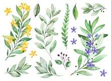 Waterverfgreens inzameling Textuur met bloeiende takken, kleine bloemen, bladeren, varenbladeren, gebladerte stock illustratie