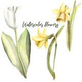 Waterverfhand geschilderde handpaint reeks voorwerpen Bloemenbloemen royalty-vrije illustratie