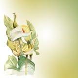 Waterverfhand geschilderde illustratie met callas in zachte toon Royalty-vrije Stock Afbeelding