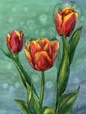 Waterverfhand geschilderde illustratie met drie rode tulpen op groene achtergrond Stock Afbeelding