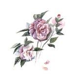 Waterverfhand geschilderde illustratie met piones die op witte achtergrond wordt geïsoleerd in Royalty-vrije Stock Afbeelding