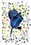 Waterverfhand geschilderde illustratie met zwarte tulpen op multic Stock Afbeelding