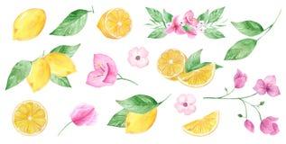 Waterverfhand geschilderde inzameling van citroen en bloem kan voor druk en decoratie worden gebruikt vector illustratie
