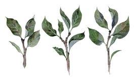 Waterverfhand getrokken illustratie van de takken van appelbomen stock illustratie