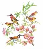 Waterverfhand getrokken patroon met tropische de zomerbloemen van en exotische vogels Royalty-vrije Stock Afbeeldingen