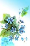 Waterverfhand getrokken vergeet-mij-nietje op blauwe achtergrond Bloemenb Royalty-vrije Stock Afbeelding
