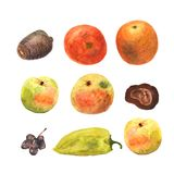 Waterverfhand getrokken vruchten en groenten De achtergrond van het Ecovoedsel Het gezonde Eten Appelen, sinaasappel, tomaat, pep stock illustratie