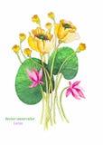 Waterverfillustratie Roze Lotus Vector Bloemen achtergrond Stock Foto's