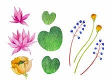 Waterverfillustratie Roze Lotus Vector Bloemen achtergrond Stock Foto