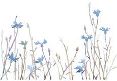 Waterverfillustratie van blauwe korenbloemen Royalty-vrije Stock Afbeeldingen