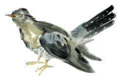 Waterverfillustratie van een koekoeksvogel Stock Afbeelding