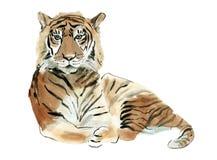 Waterverfillustratie van een tijger stock illustratie