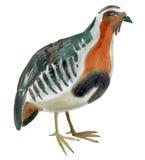 Waterverfillustratie van een vogelpatrijs op witte achtergrond vector illustratie