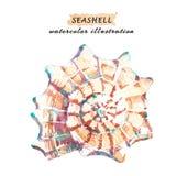 Waterverfillustratie van kleurrijke die zeeschelp op witte achtergrond wordt geïsoleerd vector illustratie