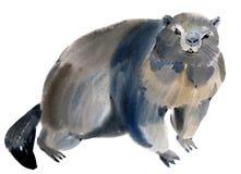 Waterverfillustratie van marmot Stock Fotografie