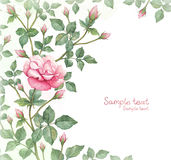 Waterverfillustratie van roze bloem Stock Fotografie