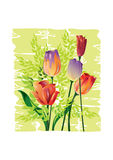 Waterverfillustratie van Tulpen - Illustratie Royalty-vrije Stock Afbeeldingen