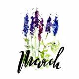 Waterverfillustratie van wildflowers, het schilderen lupines op een witte en gekleurde achtergrond met letterinf van maart Royalty-vrije Stock Fotografie