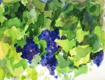 Waterverfillustratie van zwarte druif Stock Afbeelding