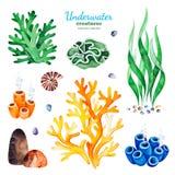 Waterverfinzameling met multicolored koraalriffen, zeeschelpen en zeewieren stock illustratie