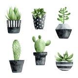Waterverfinzameling met succulents en cactus vector illustratie