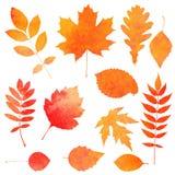 Waterverfinzameling van mooie oranje de herfstbladeren Stock Afbeeldingen