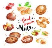 Waterverfinzameling van noten stock illustratie