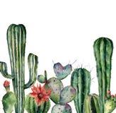 Waterverfkaart met cactus Hand geschilderde die druk met woestijninstallaties op witte achtergrond worden geïsoleerd Bloeiende ca royalty-vrije illustratie