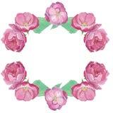 Waterverfkader van roze open rosebuds en groene bladeren vector illustratie
