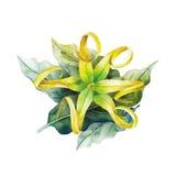 Waterverfkananga-olie royalty-vrije illustratie