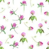 Waterverfklaver op wit wordt geïsoleerd dat Zacht naadloos patroon met bloeiende roze klaver Leuk botanisch behang binnen royalty-vrije stock afbeeldingen